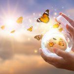 Butterflies released from a jar